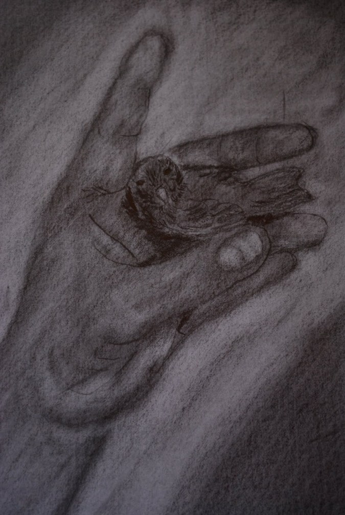 [Sketched+bird.JPG]